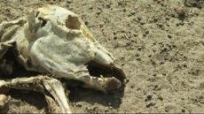 Afryka: susza zagraża ludziom i zabija zwierzęta