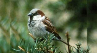 Populacja ptaków w Ameryce skurczyła się o 29 procent