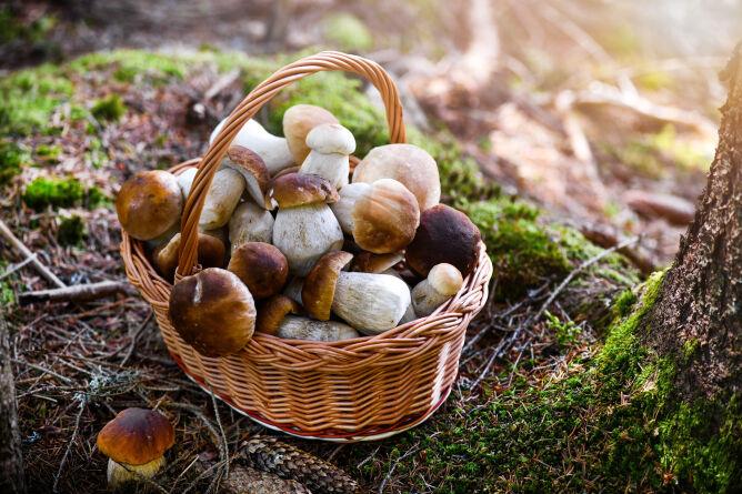 Jak mrozić grzyby? Jak je przygotować i jak długo przechowywać?